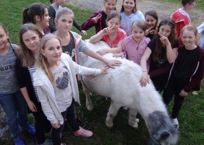 Pony in Sachsenbrunn